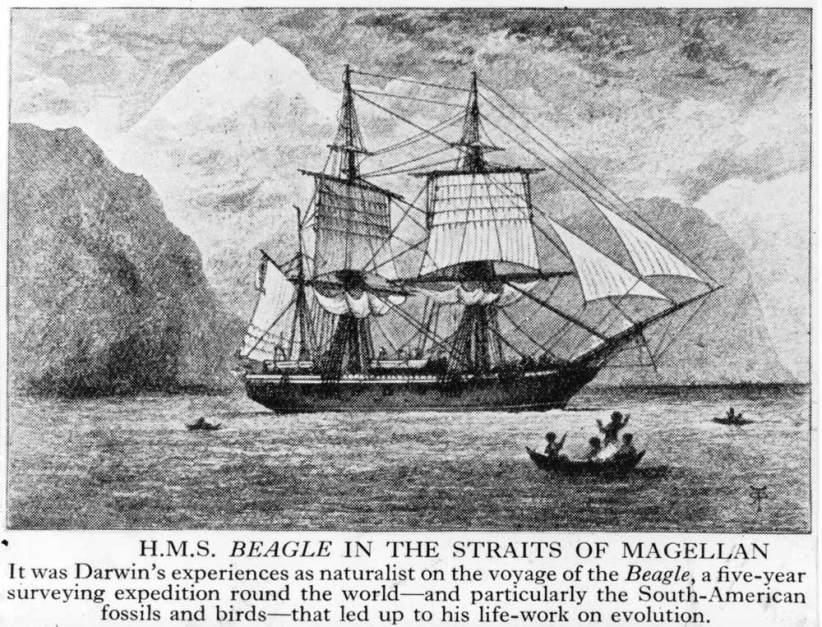 """The """"Beagle"""""""